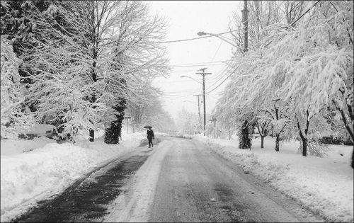 Charlottesville Snowstorm February 2010 10
