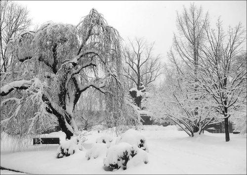 Charlottesville Snowstorm February 2010 11