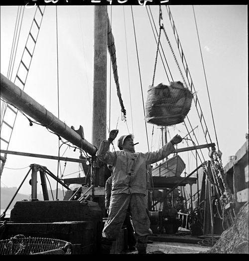 Gordon Parks New York New York Dock stevedores at the Fulton