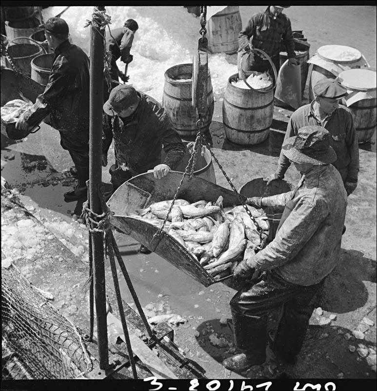 Gordon Parks New York New York Fulton fish market dock steve