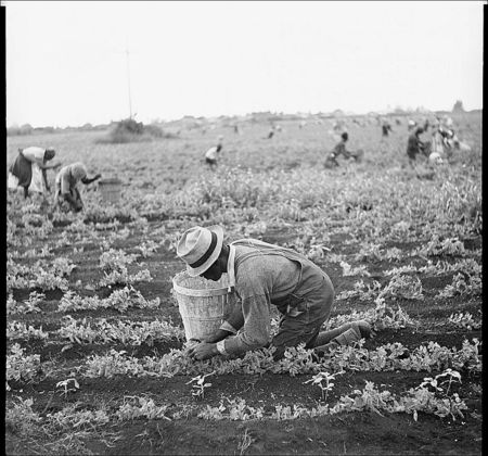 Arthur Rothstein Picking beans.Belle Glade Florida 1937 C