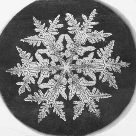 Wilson A Bentley Snowflake Study 1890