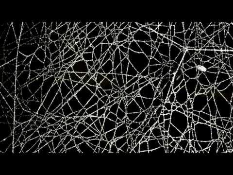Spider Web Cornstarch